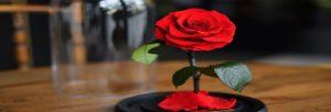 fleur éternelle